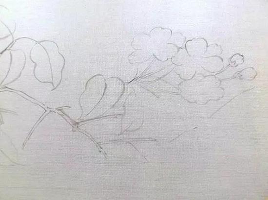 行业资讯 简单易学的团扇绘画方法     6,画叶子的颜色,先用花青或者